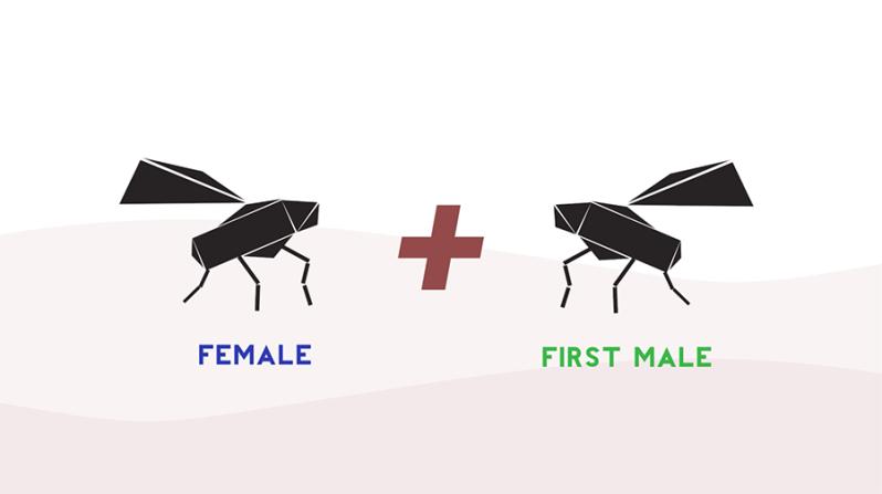 enveast-bugs-life.png