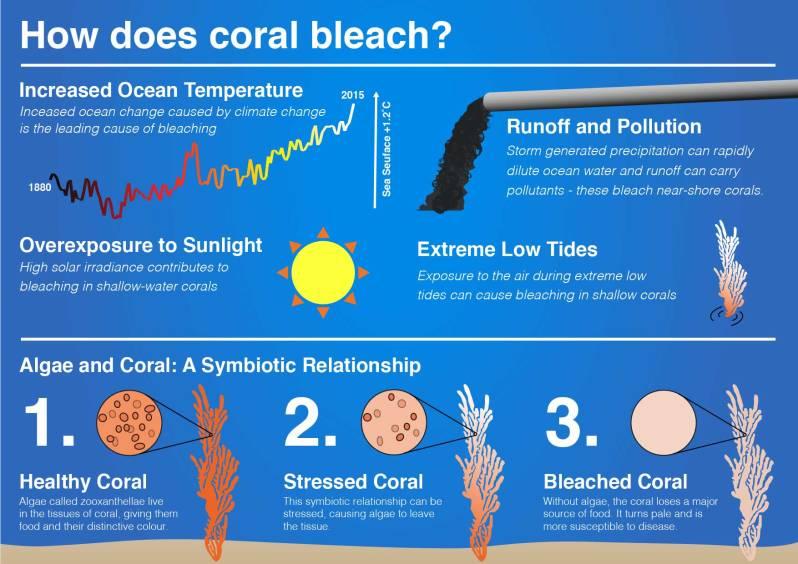 ceeda_infohackit_coral