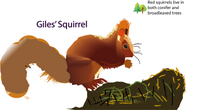 Giles' Squirrel
